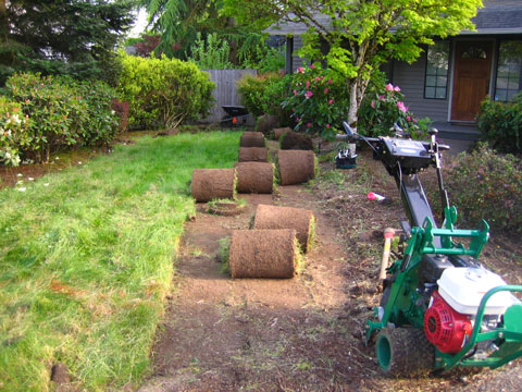 installing a new tucson sod lawn how to do it right sod