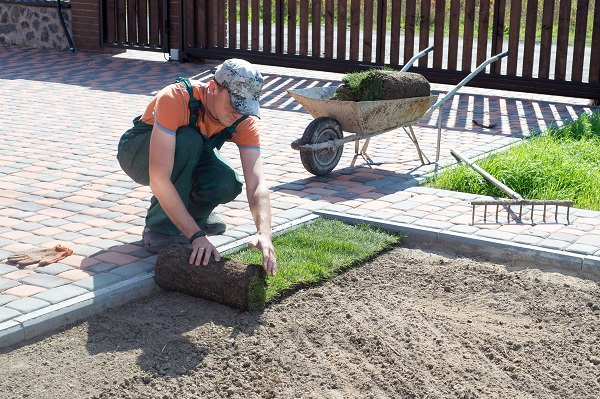Planting Sod In Fall 5 Tips For Success Updated August 2019
