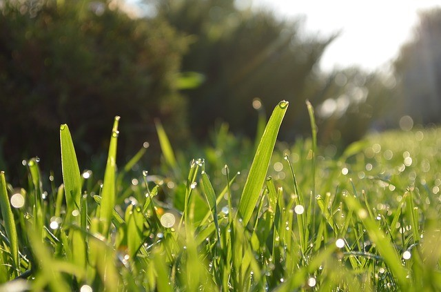 Learn how to repair dead spots in your lawn