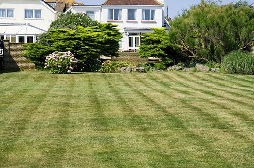 Here are some general tips on when to fertilize your lawn.