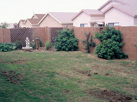 Insect control in Arizona lawns