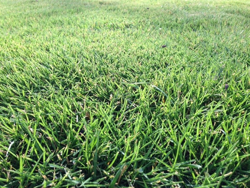 marvelous best time to dethatch lawn Part - 6: marvelous best time to dethatch lawn images