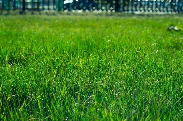 Top 3 Best Grass Types for Arizona Lawns