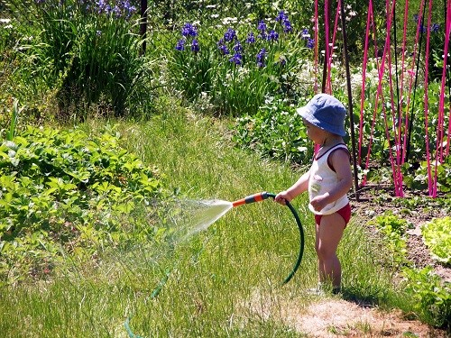 Best Watering Practices to Keep Your Arizona Sod Green and Healthy